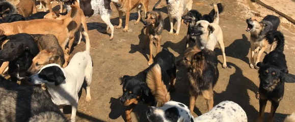Tiere in Not im Libanon